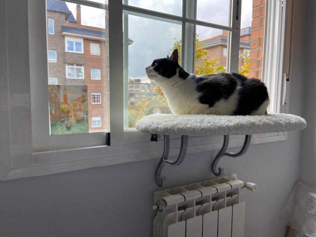 Regalos navidad gato